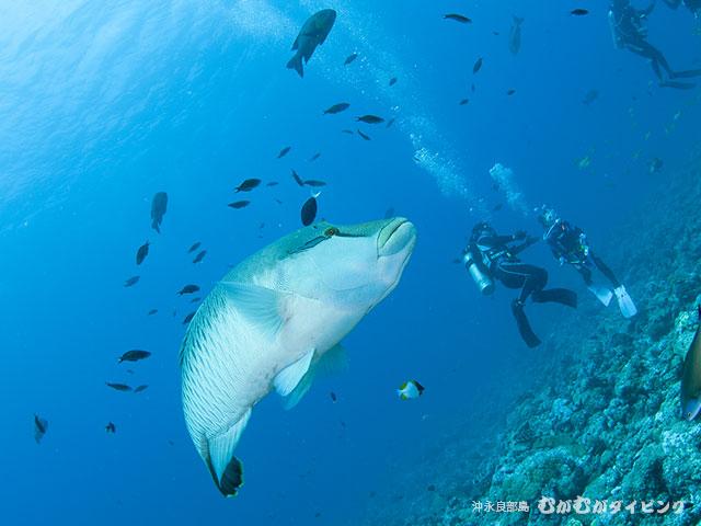 海外ダイビングツアーインドネシア