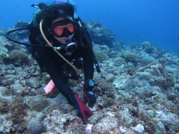 サンゴ植え付け。