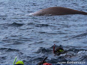 クジラスイム受付中