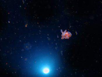 海に広がる小宇宙