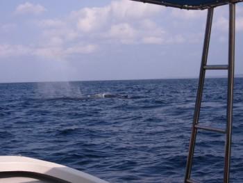 目の前をクジラが!