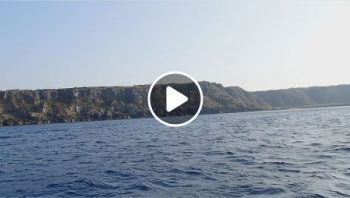 子クジラジャンプの動画