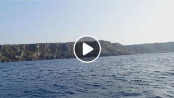 子クジラジャンプ!動画