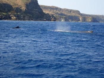 仲良し親子クジラ