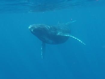 子クジラ興味しんしん。写真提供:大胡様