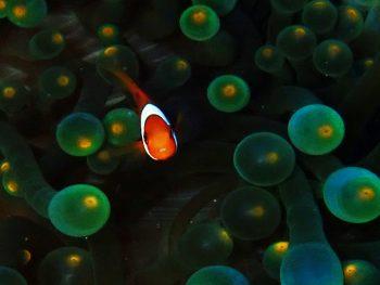 幼魚が可愛い時期です