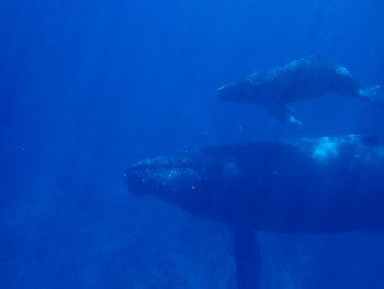 親子クジラ!hideyuki様ありがとうございます!