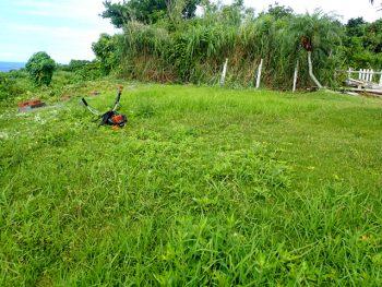草刈り前2