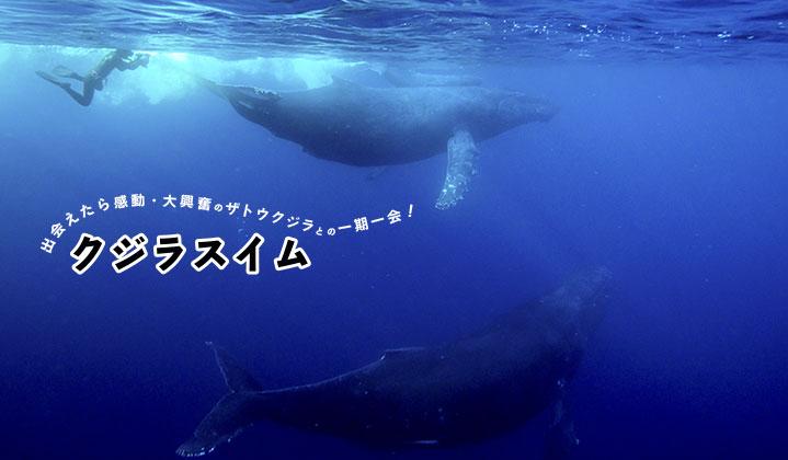 クジラスイム・ホエールウォッチング